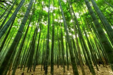 Nature bamboo green growth jungle slender perspective nature wallpaper 1046873 jpg d